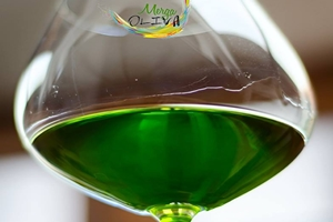 aove_jaen-aceite-de-oliva-virgen-extra